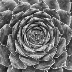 Blank & White Acceptance - Geometric Succulent - Sarah Hefty