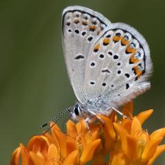 Nature Acceptance - Karner's Jewels - MJ Springett