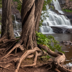 Nature Acceptance - Roots and Falls - Terry Butler