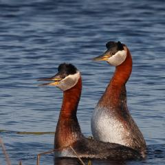 Nature Acceptance - Redneck Duet - MJ Springett