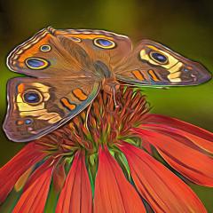 Award Creative - Butterfly on Coneflower - Marianne Diericks