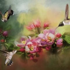 Creative Honorable Mention - Three Hummingbirds - Melissa Anderson