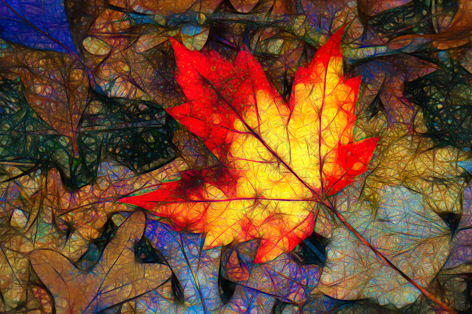 Fallen Maple Leaf in Abstract - Ken Wolter