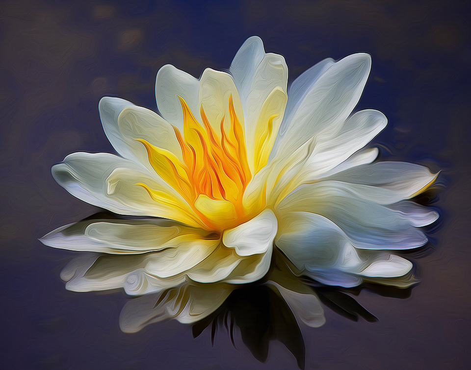 Water lily - Don Specht