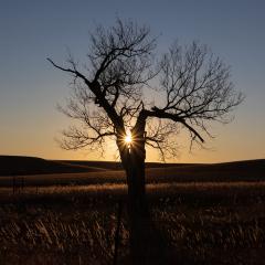 Pictorial - Sunset starburst - Jane Neumiller-Bustad