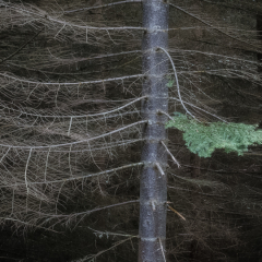 Creative - Tree - Jay Oldon-Goude