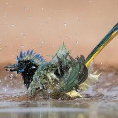 Nature - Bathing Beauty - Melissa Anderson