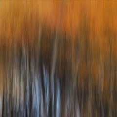 Assignment - Fall Abstract - Marge Springett