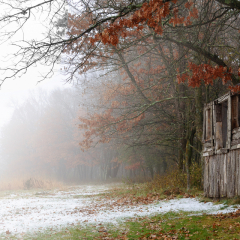 Assignment - Foggy Cabin - Kelly Perry
