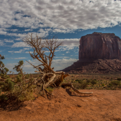 Honorable Mention - Nature - Scrub Brush at Monument Valley - Mick Richards