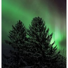 Nature - Evergreen Aurora - Michael Herrem