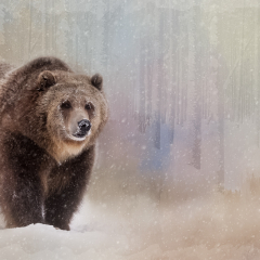 3rd Place - Altered Reality - Grizzly in the Snow - Melissa Anderson