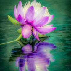 Merit - Altered Reality - Waterlily Reflection - Marianne Diericks