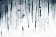 04 Arctic Wolf Fantasy