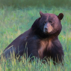 Honorable Mention Altered Reality - Bear in the Meadow - Marianne Diericks