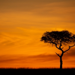 Honorable Mention Travel - Kenya Sunrise - Melissa Anderson