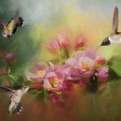 2nd Place Creative - Three Hummingbirds - Melissa Anderson