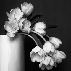 Honorable Mention Black and White - Silver Glory - Terry Butler
