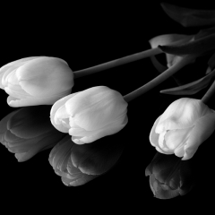 Honorable Mention Black and White - Tulips Reflected - Terry Butler