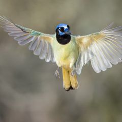 Honorable Mention Nature - Wing Spread - Melissa Anderson