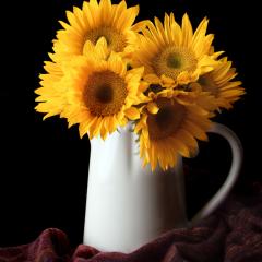 Merit Pictorial - Sunflowers - Terry Butler
