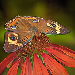 1st Place - Altered Reality - Butterfly on Coneflower - Marianne Diericks