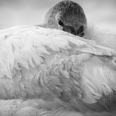 Pictorial - Keeping Warm in my Feathers - Sarah Nieminen