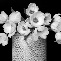 01 Tulips in a Metal Can