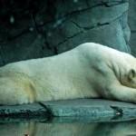 Realistic - Arctic Dreams by Rudy Wiemann