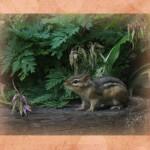Realistic - Chipmunk by Linda Donaldson