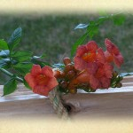 Realistic - Trumpet Vine With Rope by Linda Donaldson