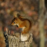 Nature - Storing Nuts by Sue Oberstar