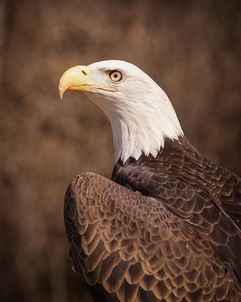 Amanda SB Eagle