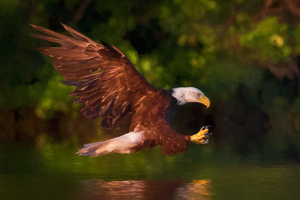 Eagle Attack - Jeff Bucklew