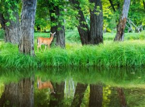 No 1 - Deer in Little Venice
